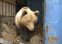 На аэродроме в Тверской области из спячки вышел медведь Мансур