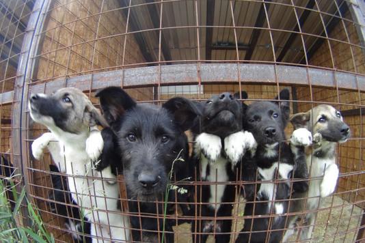 ТверскойСК завел дело после смерти отголода неменее 200 собак
